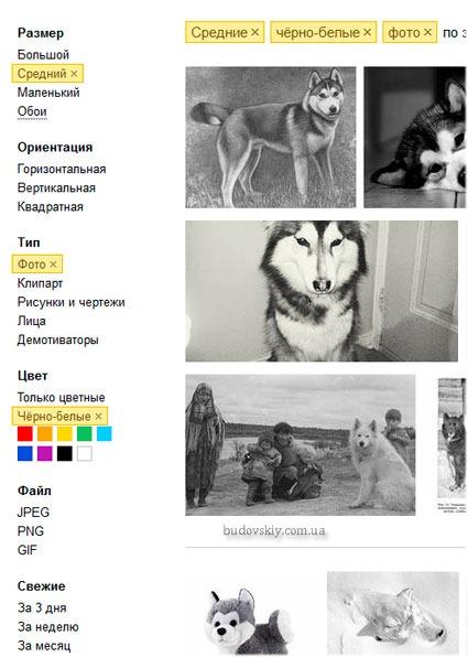 Yandex-filtri-poiska-po-izobrazheniyam